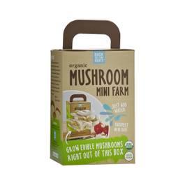 Mushroom Mini Farm
