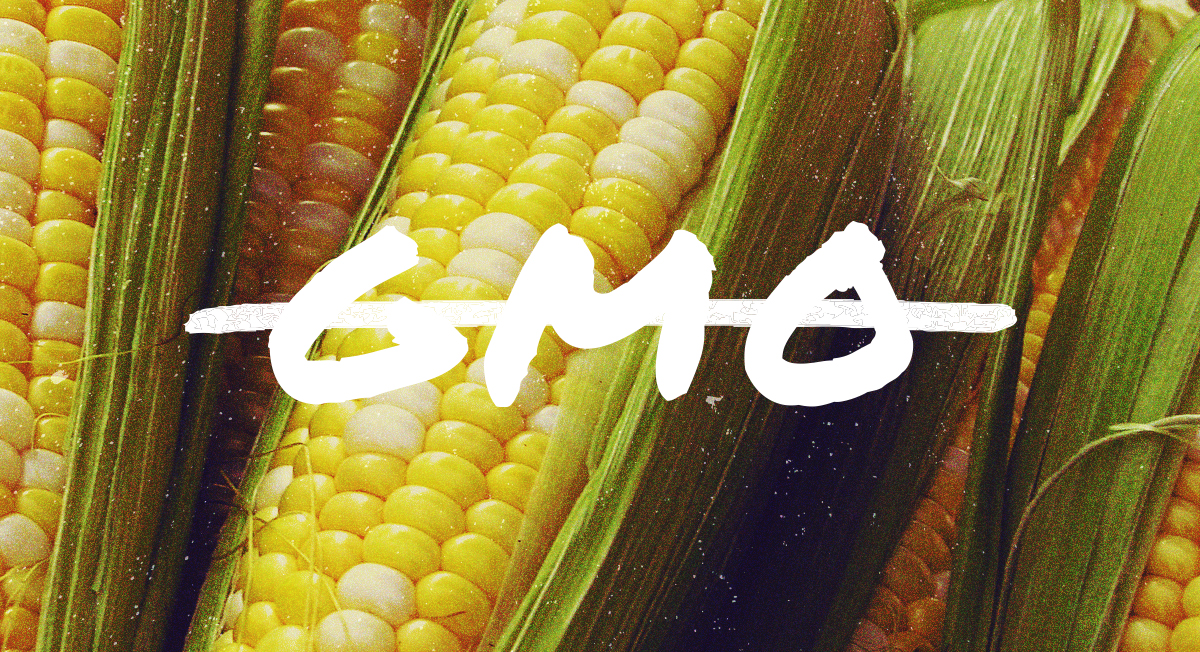 GMO Definition: What is GMO?