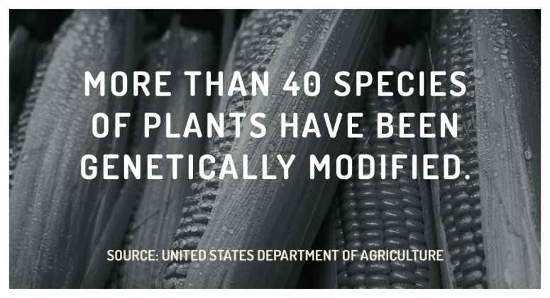 Staggering Statistic: GMOs Dominate U.S. Farming
