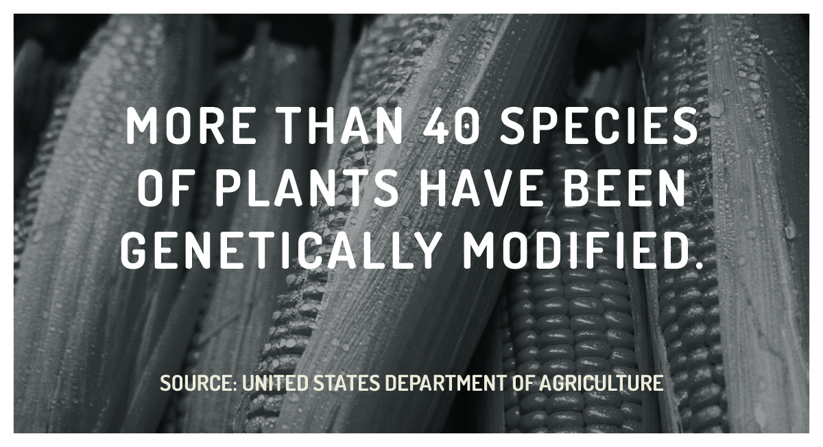Staggering Statistic: GMOs Dominate U.S. Farming