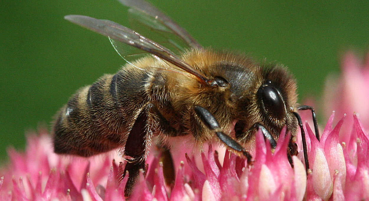 Why You Should Care That Bees Have An Addiction Problem