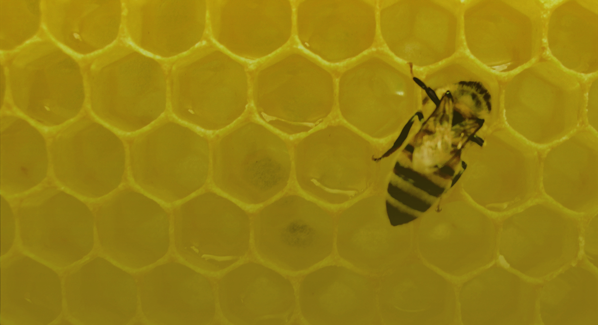 Here's Why The White House Is Buzzing About Bees