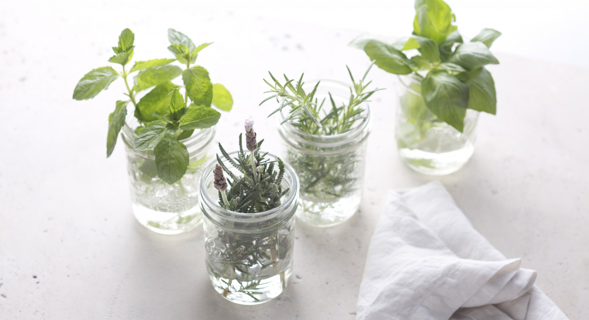 Tip of the Week: Store Fresh Herbs in Water