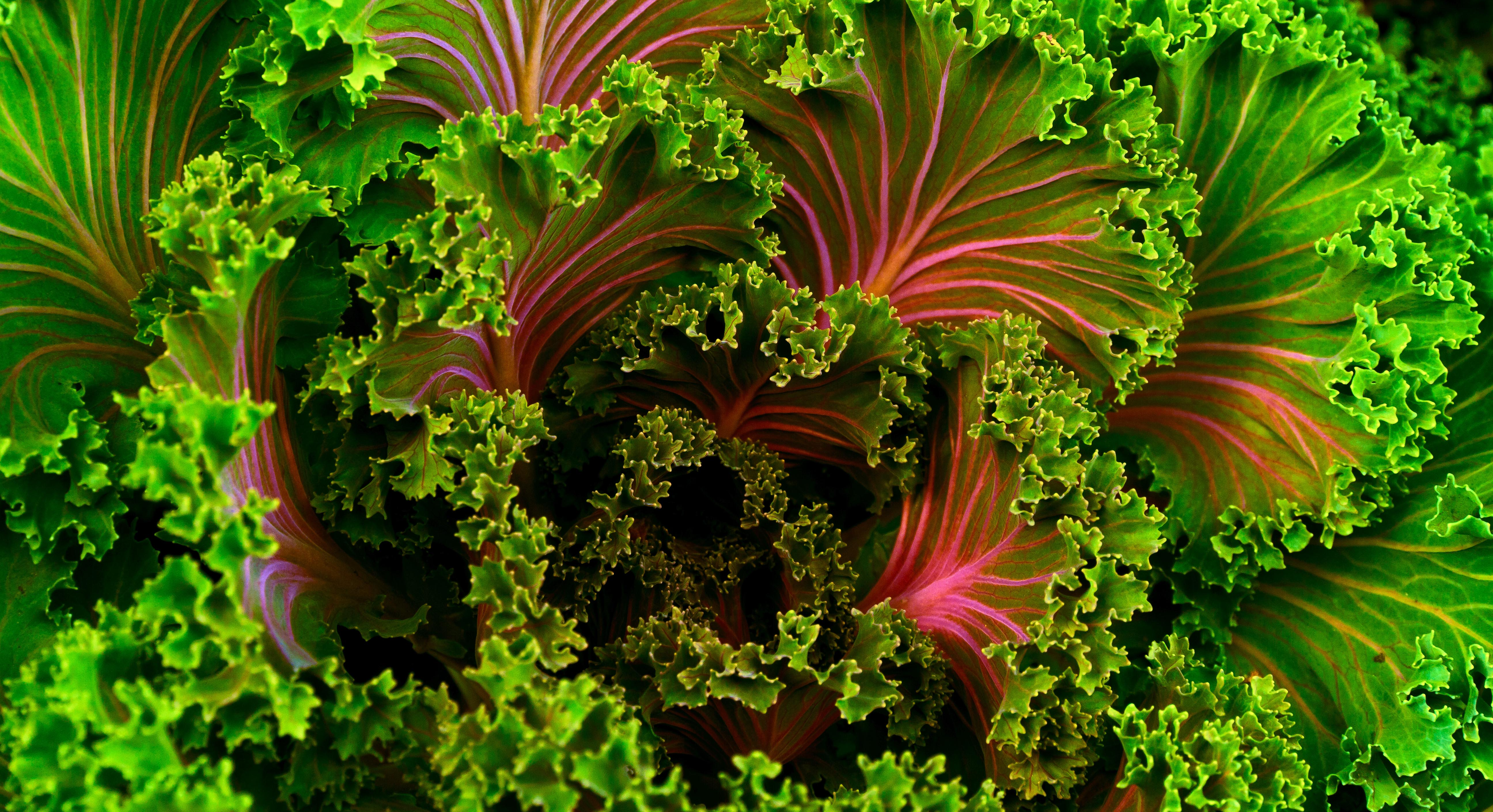 Why There's No Reason To Be Afraid of 'Killer Kale'