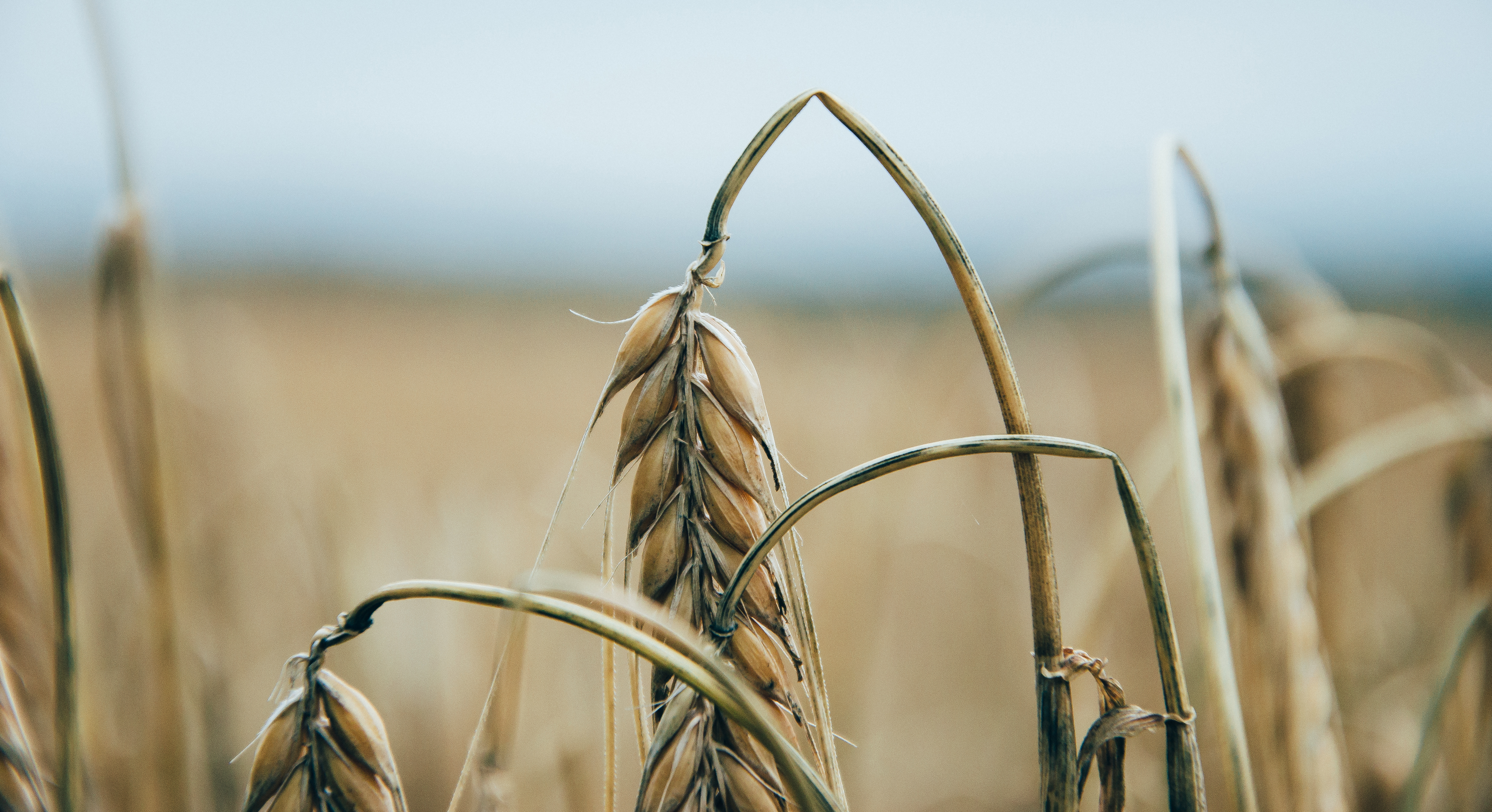 GMO Secrecy Gains Momentum: The DARK Act Passes Another Hurdle