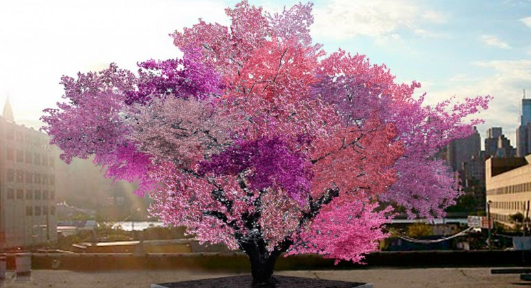 It's Not a Fairytale: This Tree Can Grow 40 Different Fruits