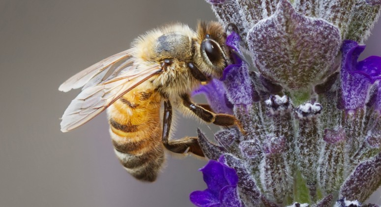 Final Answer: Here's What's Wiping Out Our Bees