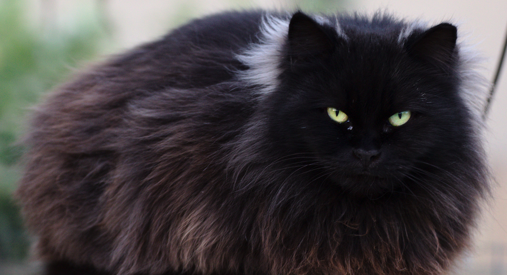 What's With the Cattitude? 11 Quirky Cat Behaviors, Decoded