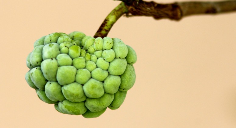 You'll Be Dying to Taste These 5 Bizarre Fruits