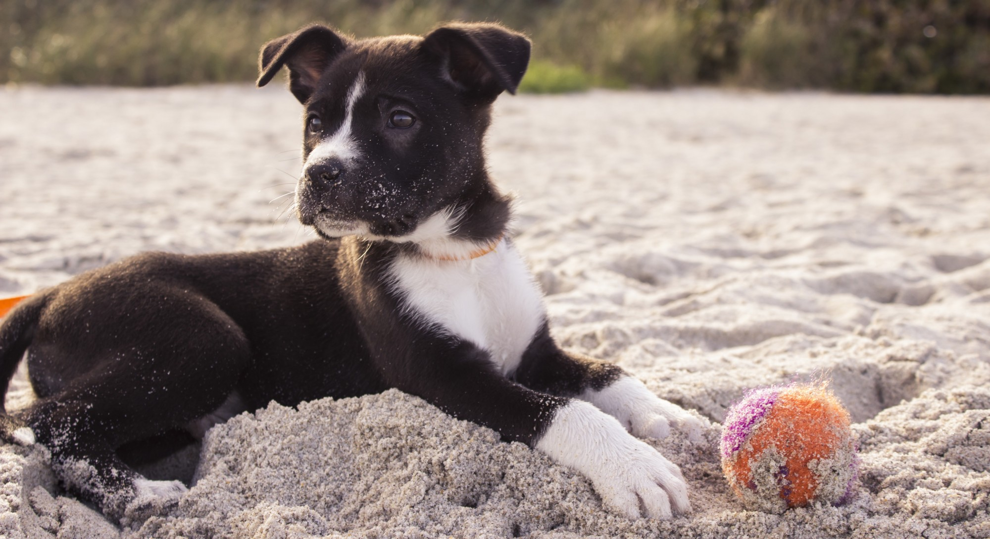 Making Your Pup Smarter: Is It Even Possible?