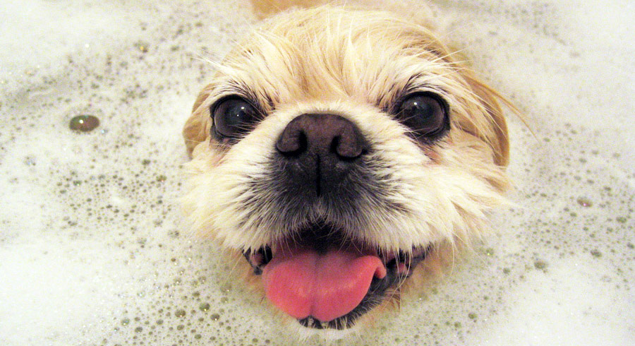 How Often Do Dogs And Cats Really Need Baths?