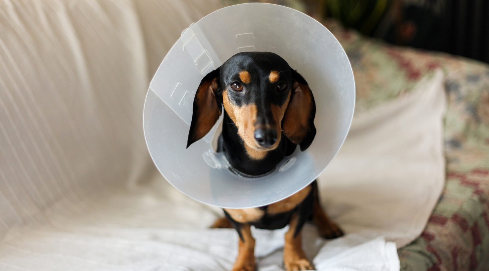 Yes, Pet Health Insurance Is a Real Thing