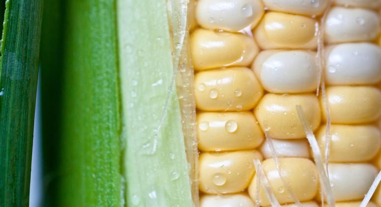 The Frightening USDA Ruling In Favor of Frankenfoods