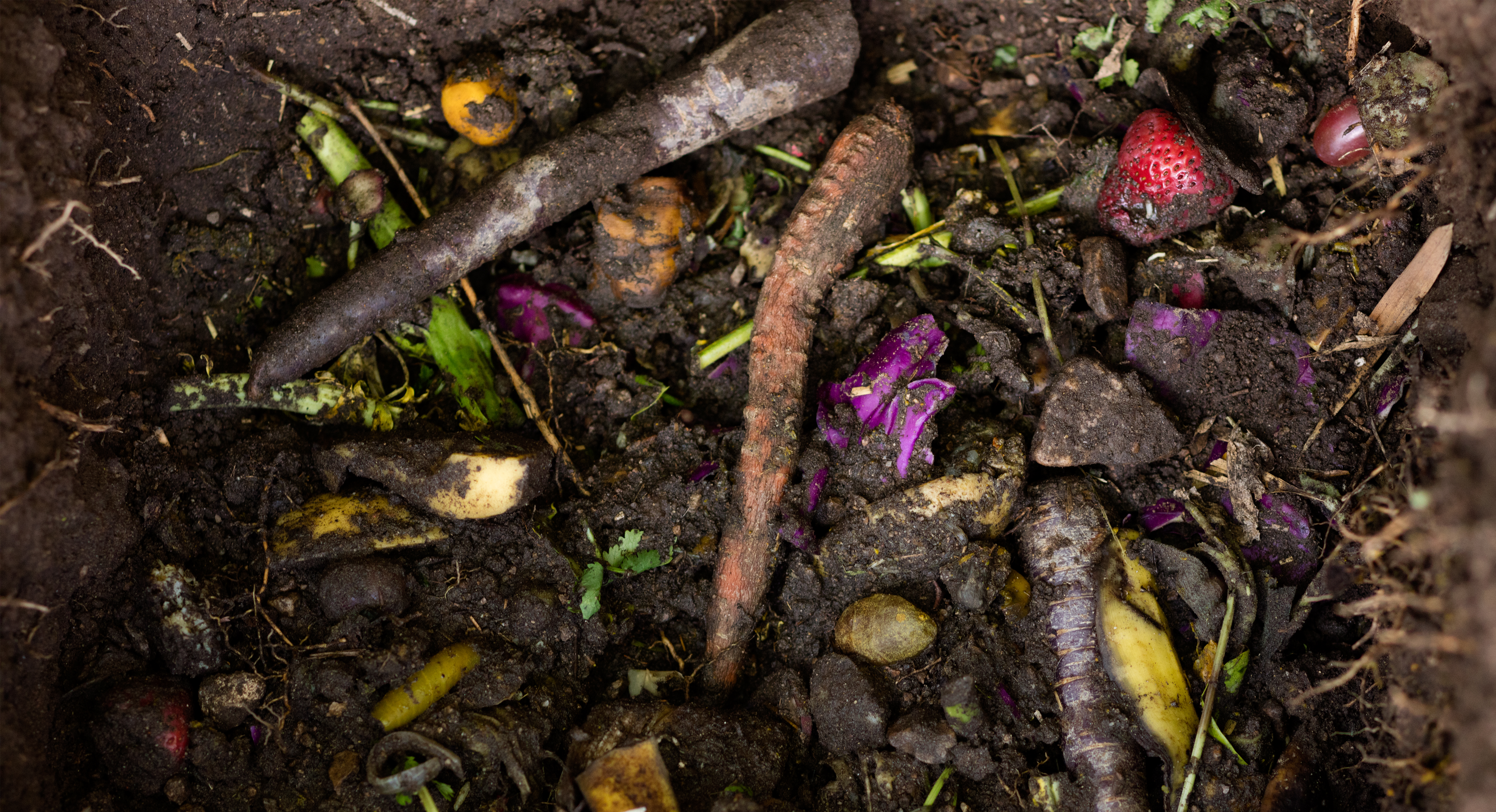 Composting 101: Green Your Garden and Minimize Food Waste All At Once