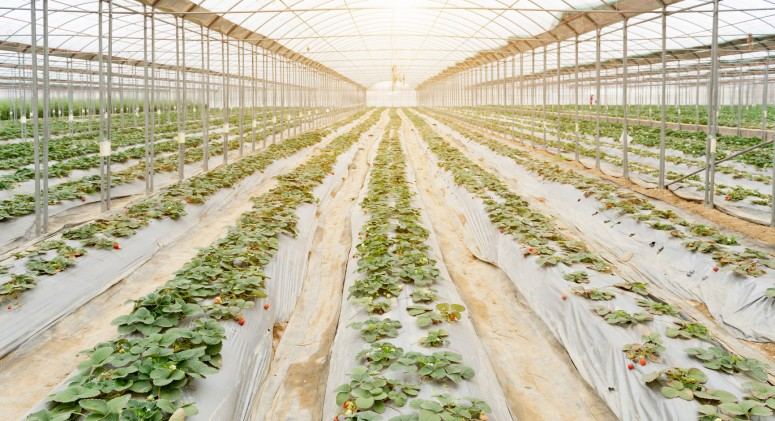 Monsanto Claims Organic Agriculture Isn't Sustainable. Is There Any Truth to It?