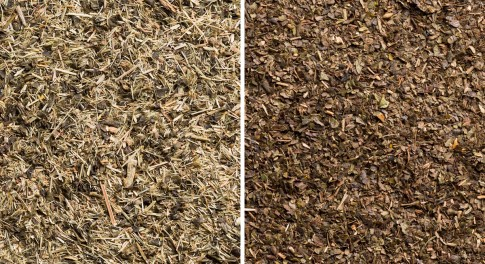 Green Tea Vs White Tea