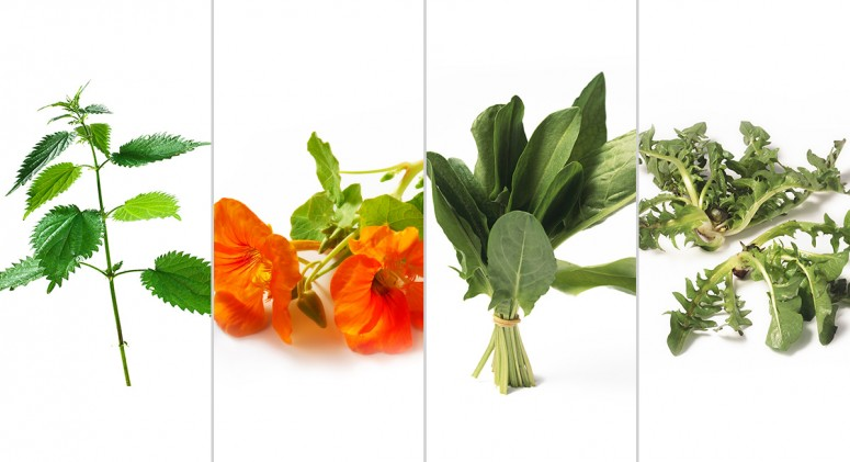 4 Weeds You Can Eat (They Might Be Growing in Your Backyard Right Now!)