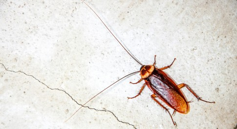 Is 'Cockroach Milk' the Superfood of the Future?