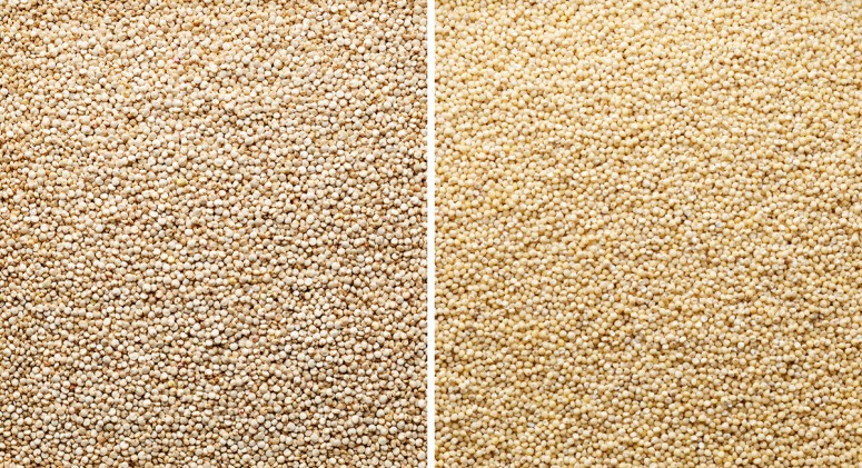 Millet or Quinoa both are gluten-free Millet or Quinoa this is here the question . Many know Quinoa from the health food markets and have used it. But what about Millet -Millet vs. Quinoa