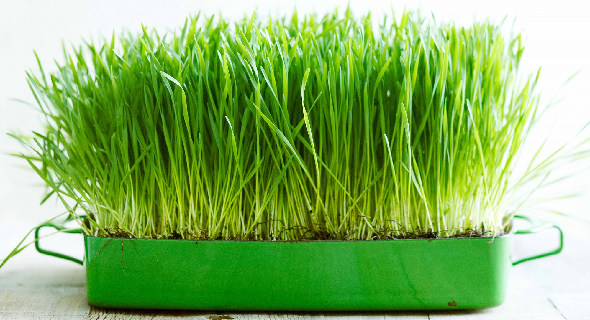 benefits of wheatgrass Dr berg understands that healthy weight loss is fast weight loss for a specialized healthy weight loss plan based on your body type visit his website today.