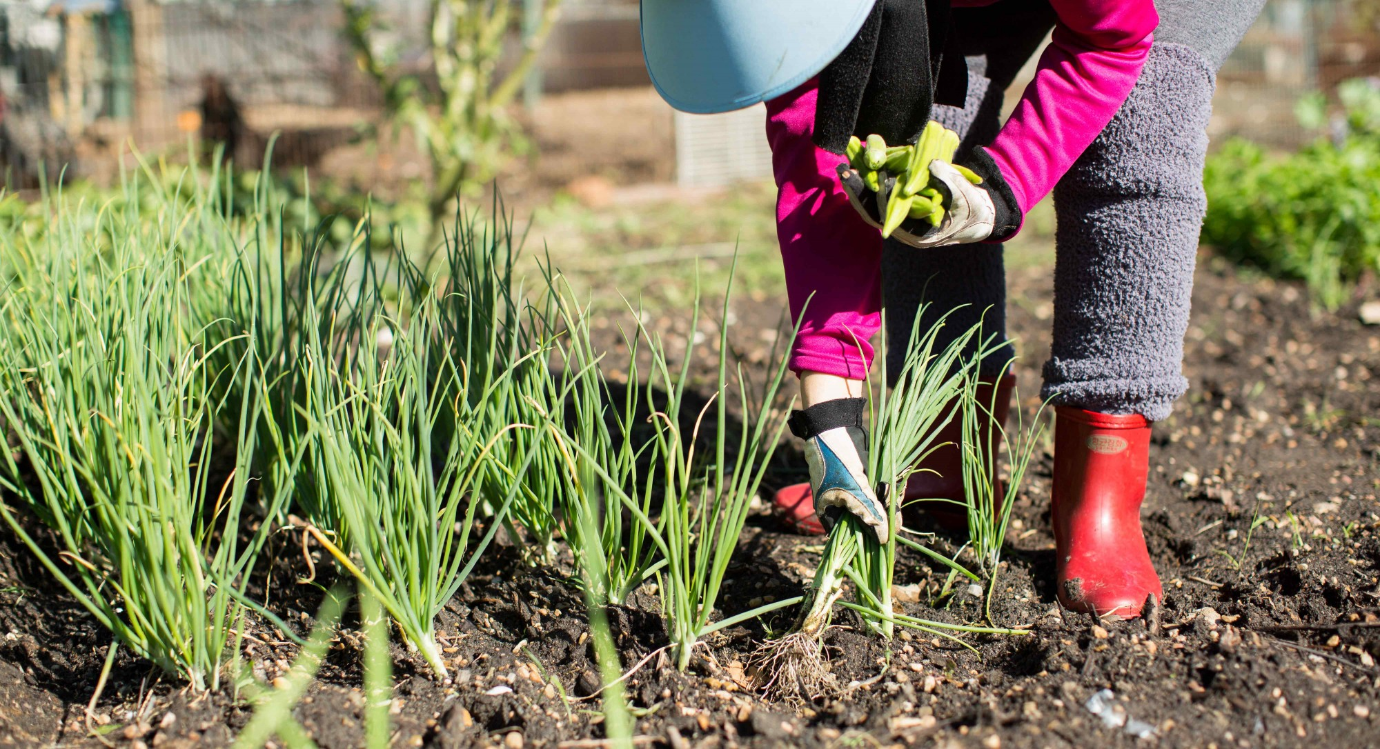 6 Ways to Fight Garden Pests Without Chemicals