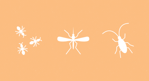 From Ants to Weevils: How to Naturally Banish 11 Pesky Insects From Your Home