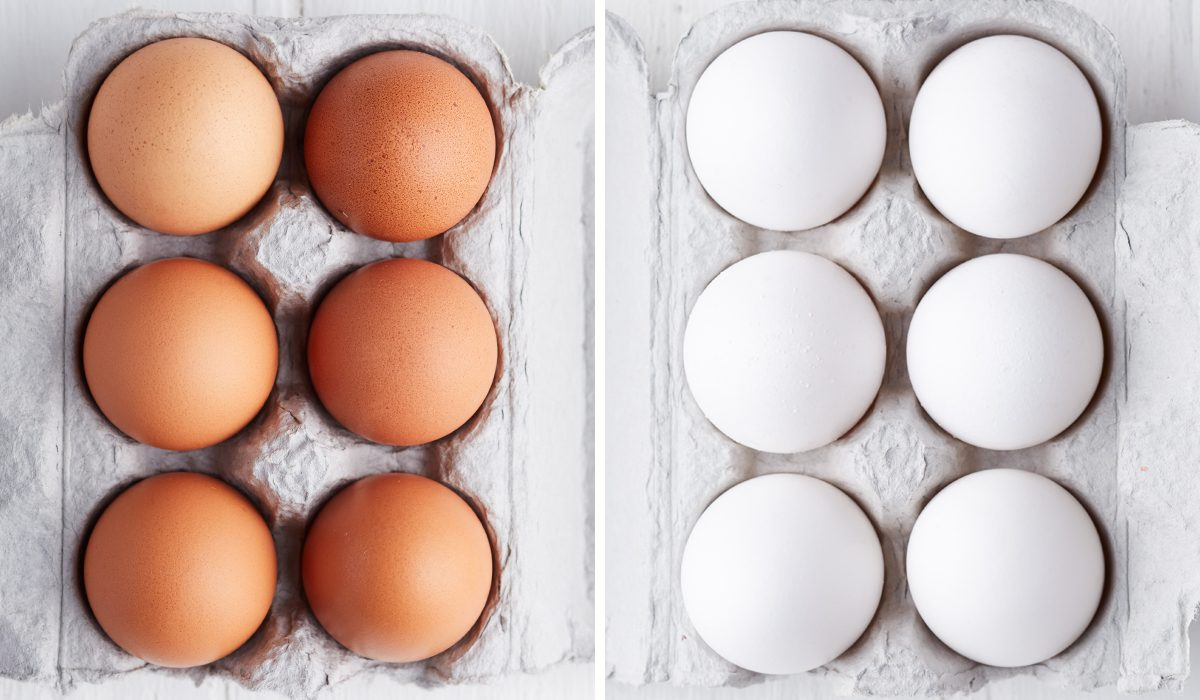 Brown Eggs Vs. White Eggs