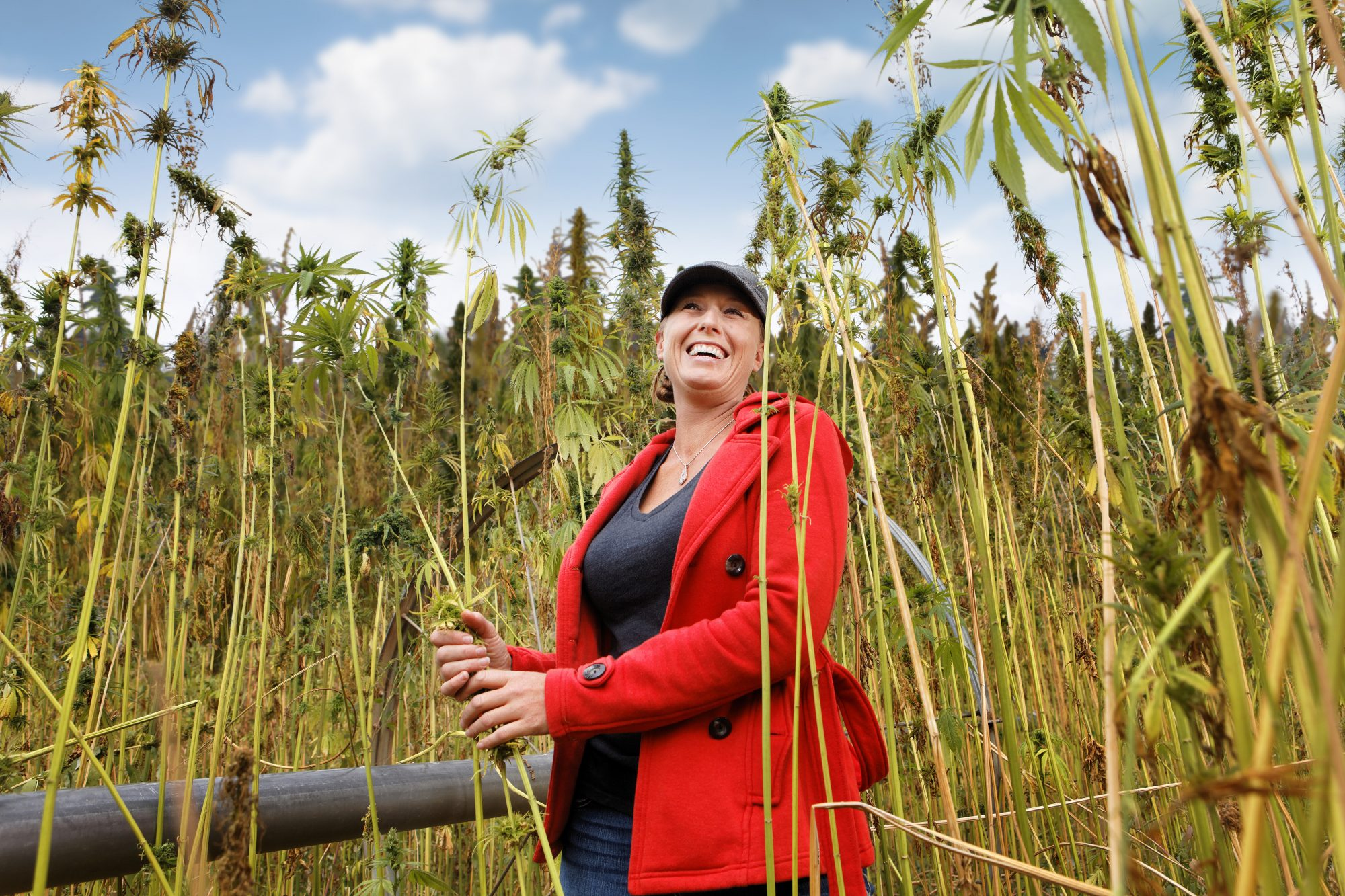 It's Rope, Not Dope: Learn About Hemp's Rocky History in the U.S.—And How You Can Help Shape Its Future