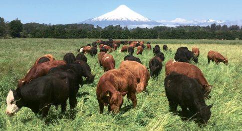 Spotlight On: Thrive Market Beef