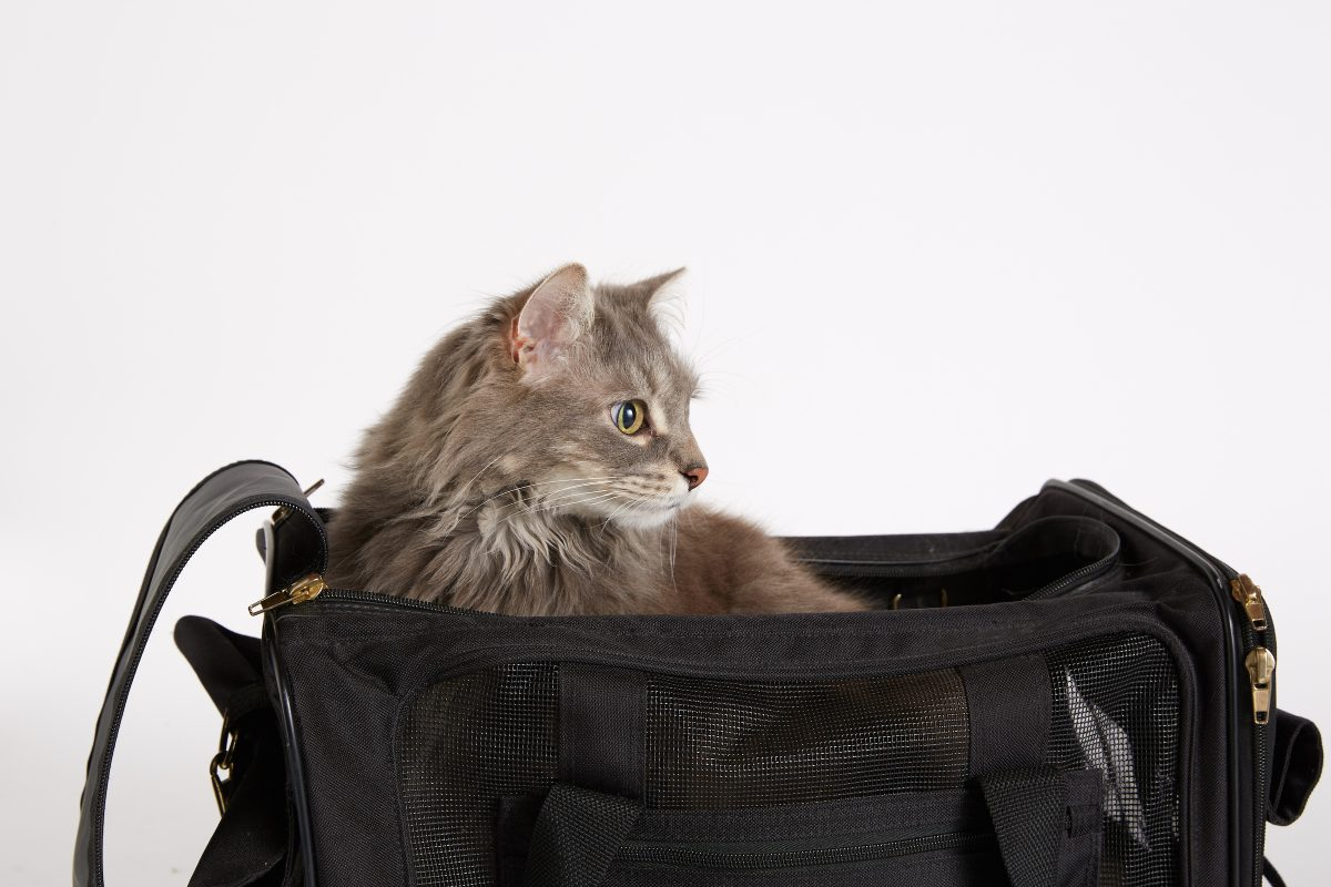Best Products for Cats