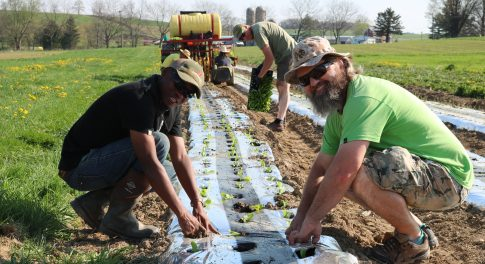 How Rodale Institute Turns Veterans Into Farmers