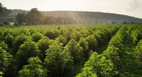 Sunsoil Is Setting New Standards for Organic Hemp Extract Oil