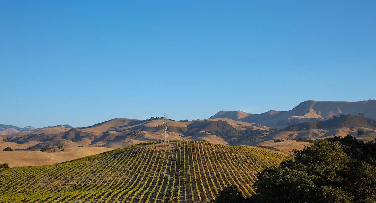 Vineyards in Santa Maria, California