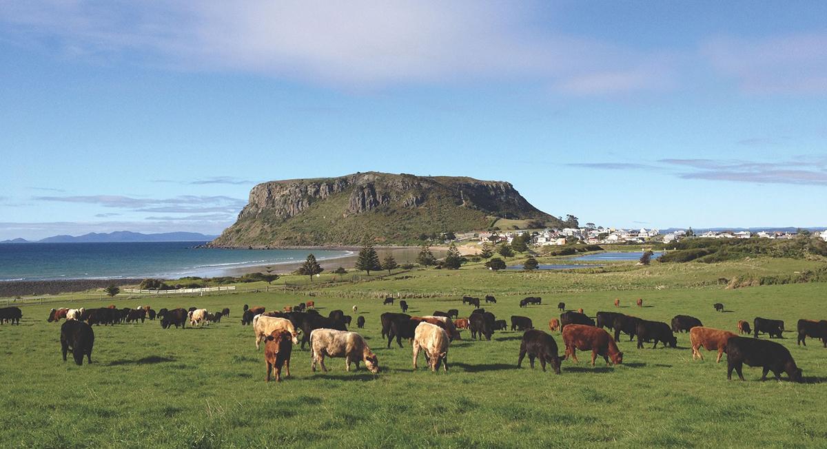 THRIVE MARKET BEEF STICKS BLOG COWS