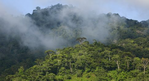 Alliance for the Amazon: How You Can Help Us Fight for Change