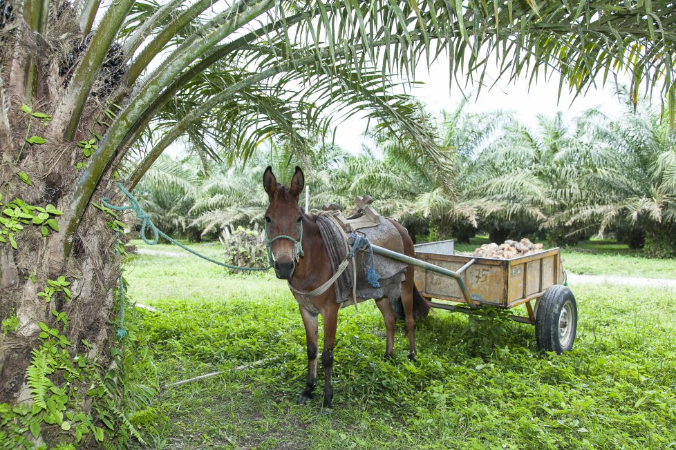 Palm Done Right donkey on farm