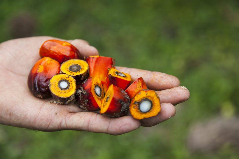 Palm Done Right Proves Palm Oil Can Be Grown for Good