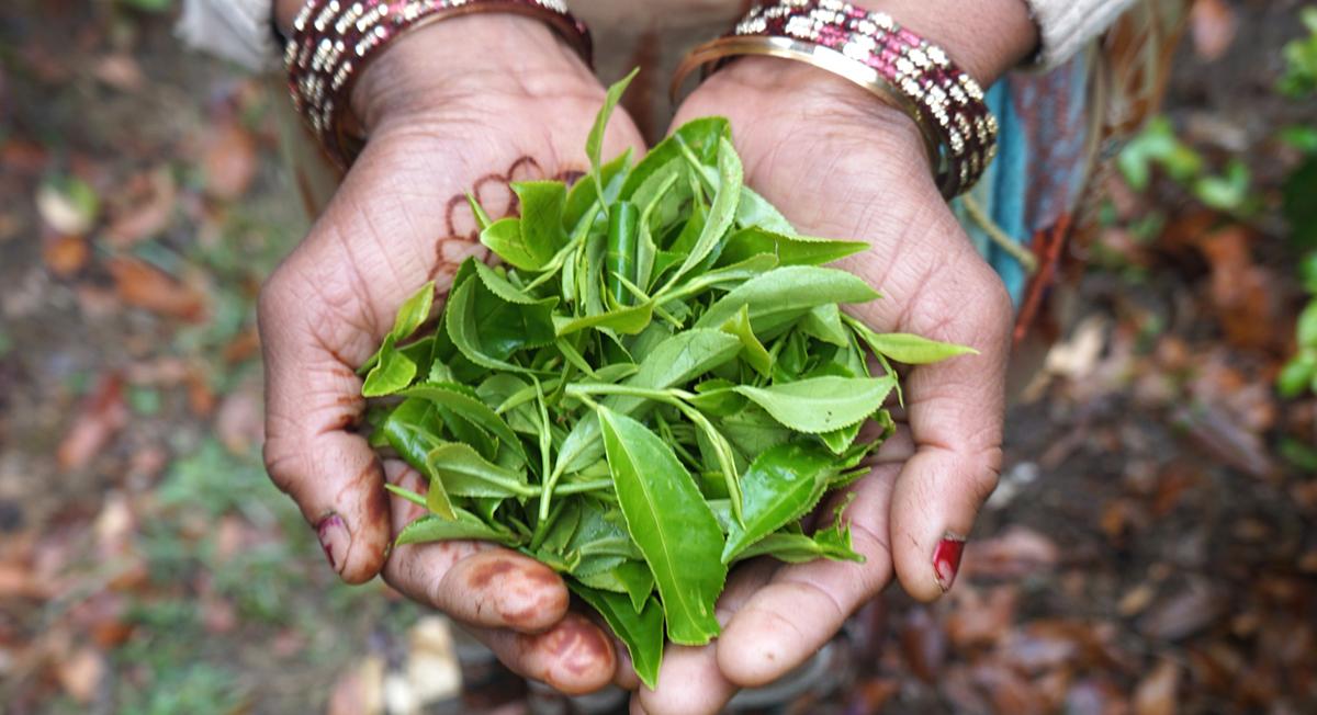 Thrive Market Organic Loose Leaf Tea