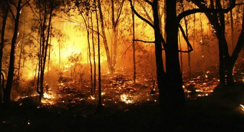Australian Wildfire Relief: How Member Donations are Making a Huge Impact