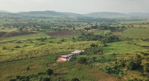 Meet Moringa: Kuli Kuli's Superfood Addressing Climate Change