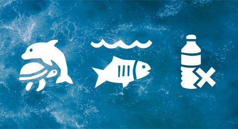 Meet Our 4 Ocean-Friendly Values
