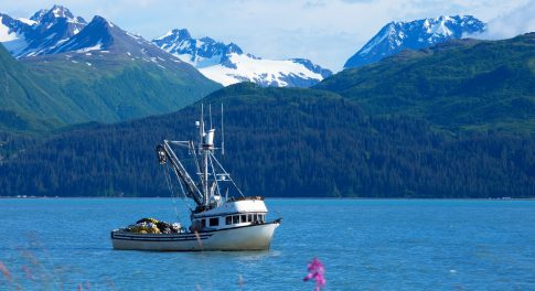 What You Need to Know About Sustainable Seafood