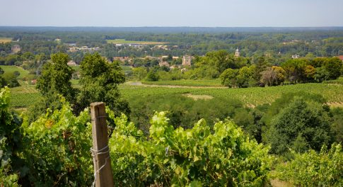 Returning to Bordeaux: An Organic Winemaker Gets Back to Her Roots