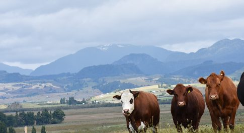 From the Prairies of Patagonia to Your Door: Why Our Grass-Fed Beef is Better